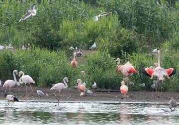 flamingo's van Petra De Jonge
