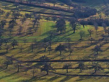 Boomgaardweide met kale bomen in de winter vanuit vogelperspectief van Timon Schneider