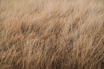 Der Veluwe-Wind im Gras von Nanda van der Eijk
