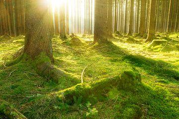 Bos en zon van Oliver Henze