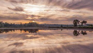 Kalmthoutse Heide von Tom Opdebeeck