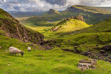 Schafe in der Quiraing von Antwan Janssen