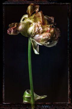 Alte Blumen 12 von Henk Leijen
