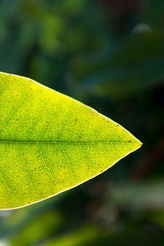 Makrofoto grünes Rhododendronblatt | Fine Art Naturfoto | Botanische Kunst von Karijn | Fine art Natuur en Reis Fotografie