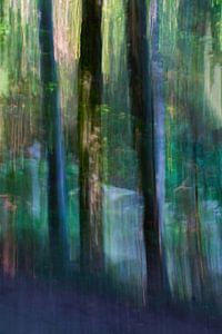 A travers les arbres... II sur Klaartje Majoor