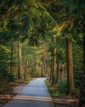 Radweg von Hans Monasso