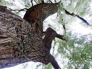Tree Magic 61