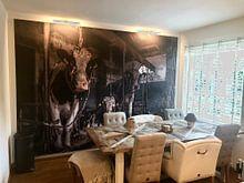 Kundenfoto: Kuhe im alten Kuhstal von Inge Jansen, als akustikbild