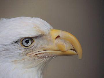 Amerikanischer Weißkopfseeadler von Maurice Dawson