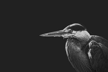 Héron en noir et blanc sur