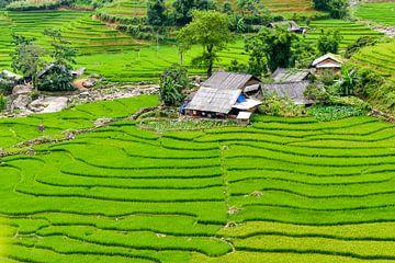 Reisfeld in den Bergen von Vietnam von Richard van der Woude