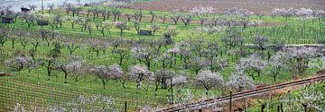 Danube valley in spring van Leopold Brix