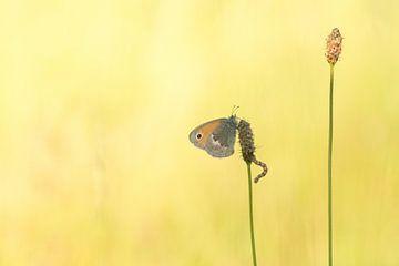 Vlinder met rupsje in het laatste avondlicht. van Francis Dost