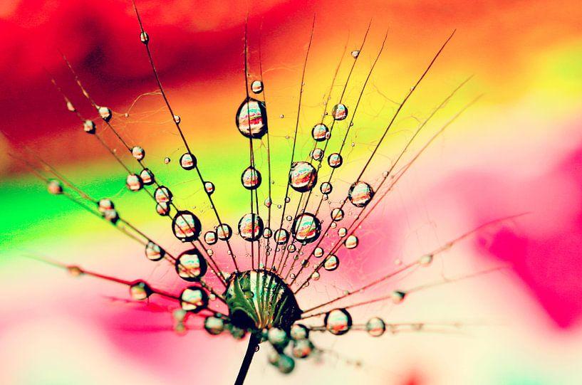 drops and dandelion... van Els Fonteine