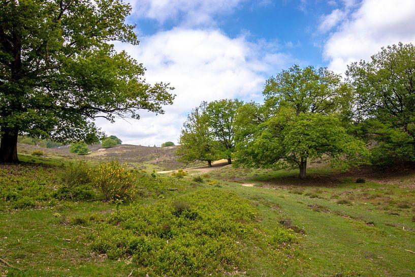 Een foto van natuurpark Veluwe Zoom van Thomas Winters