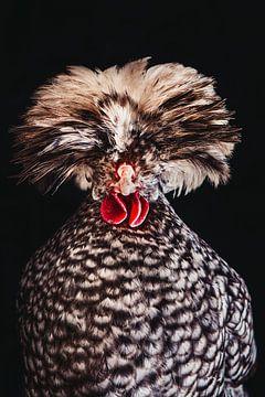 Chicken Rockstar! Hollandse Kuifhoender statieportret van Lotje van der Bie Fotografie