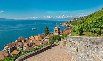 Wijngaarden aan het meer van Genève, St-Saphorin, Vaud, Zwitserland van Rene van der Meer