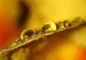 Raindrops, a little spring