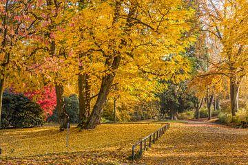 Gelbe Herbstpracht im Neropark van Christian Müringer