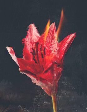 Burnin von Teis Albers