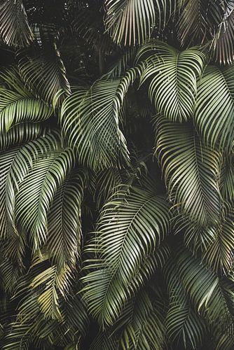 Tropisch palmen bos