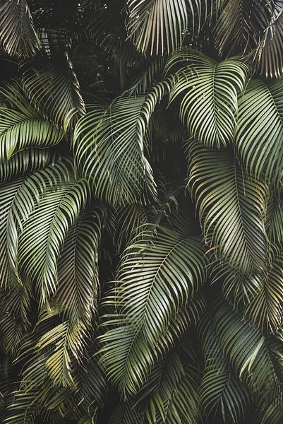 Tropisch palmen bos van MAIA prints
