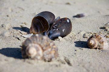 Schelpen op het strand van Erik Winde