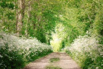 een droomwandeling in het wit..in de Zak van Zuidbeveland von Els Fonteine