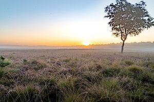Heideveld bij zonsopgang van Diana Kors
