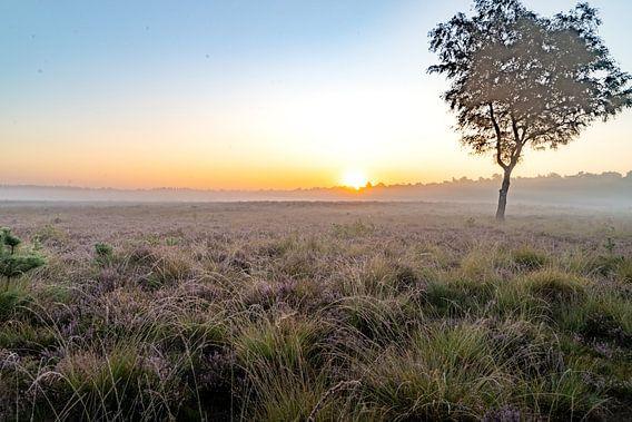 Heideveld bij zonsopgang