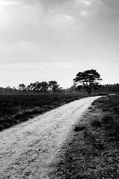 Schwarz-Weiß-Landschaftsfotografie - Pfad auf der Veluwe von Linsey Aandewiel-Marijnen