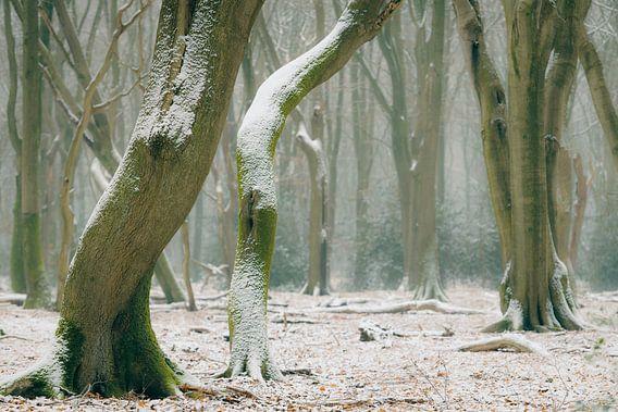 Buchenbäume mit dramatischen Formen in einem nebligen und schneebedeckten Wald