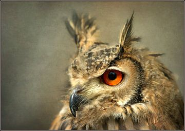 Mystic Eyes von bob van den berg