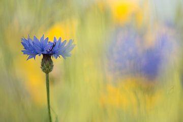 Korenbloemen von Elles Rijsdijk