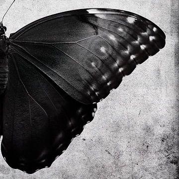 Ein Satz von zwei Schmetterlingen von David Potter