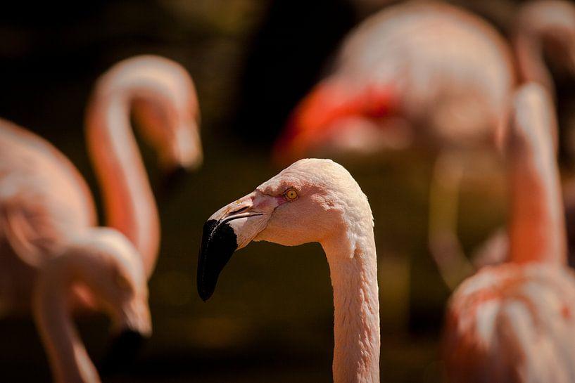 Flamingo van Ulrich Brodde