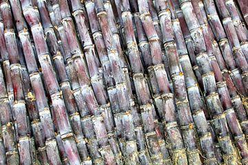 Decoratief suikerriet van