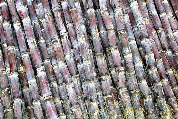 Decoratief suikerriet