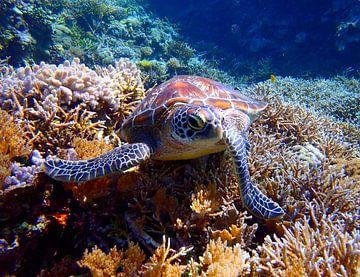 Zeeschildpad poserend op een koraalrif van Harm Ormel