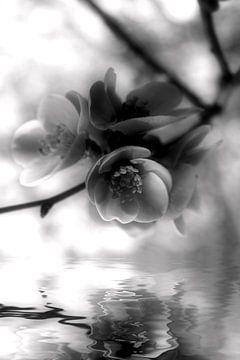 Flower van Dagmar Marina