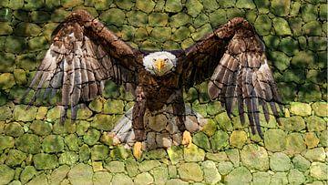 Amerikanischer Seeadler von Raymond Engelen
