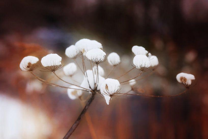 gevangen sneeuw van Marianne Bras