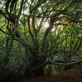 Crecimiento salvaje van Joris Pannemans - Loris Photography