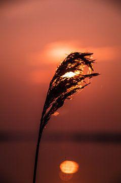 Riet voor de zonsondergang van Robert Snoek