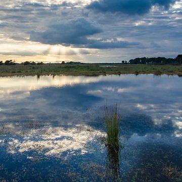Strabrechtse Heide 133 von Desh amer