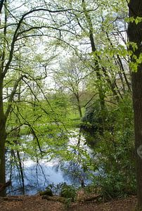 Reflexion im Wald von Jurjen Jan Snikkenburg