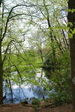 Reflexion im Wald