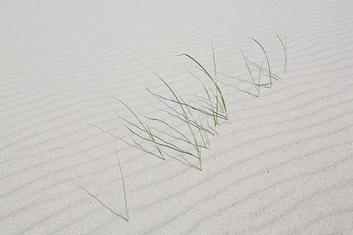 Grassprieten in het zand