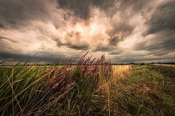 boerenlandschap van Bert-Jan de Wagenaar