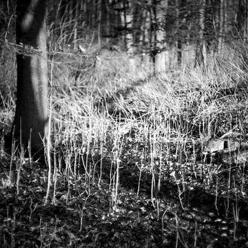 Het mysterie van het bos in de winter van Rene  den Engelsman